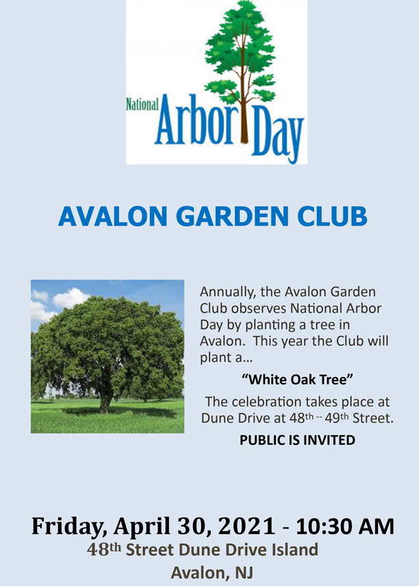 Arbor-Day-Promo-Flyer